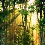 Photo en forêt avec le soleil qui filtre entre les arbres
