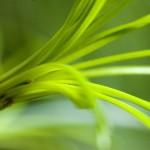 Photo macro d'une fleur verte