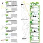 Plan des tours Bosco Verticale