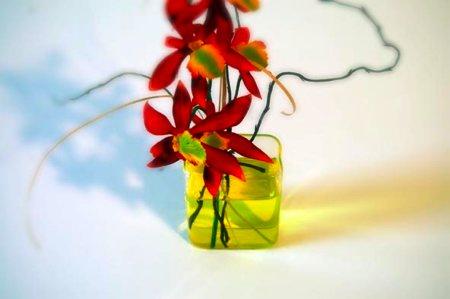 Colorant liquide pour fleurs
