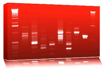 Tableau de votre ADN