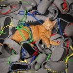 Un chat au milieu des pantoufles Lasso