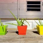 Pots de fleurs de couleurs