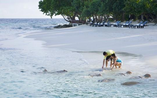 Hotel Vivanta by Taj Coral Reef aux Maldives - plage de sable blanc