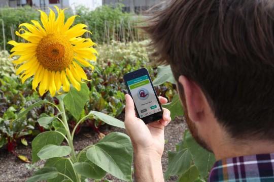 Parrot Flower Power - accessoire sans fil pour entretenir les plantes via iphone
