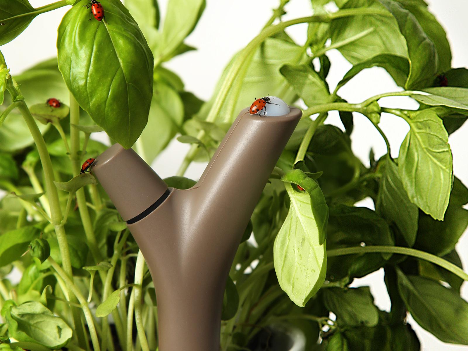 Parrot Flower Power : Le Secret pour avoir la Main Verte