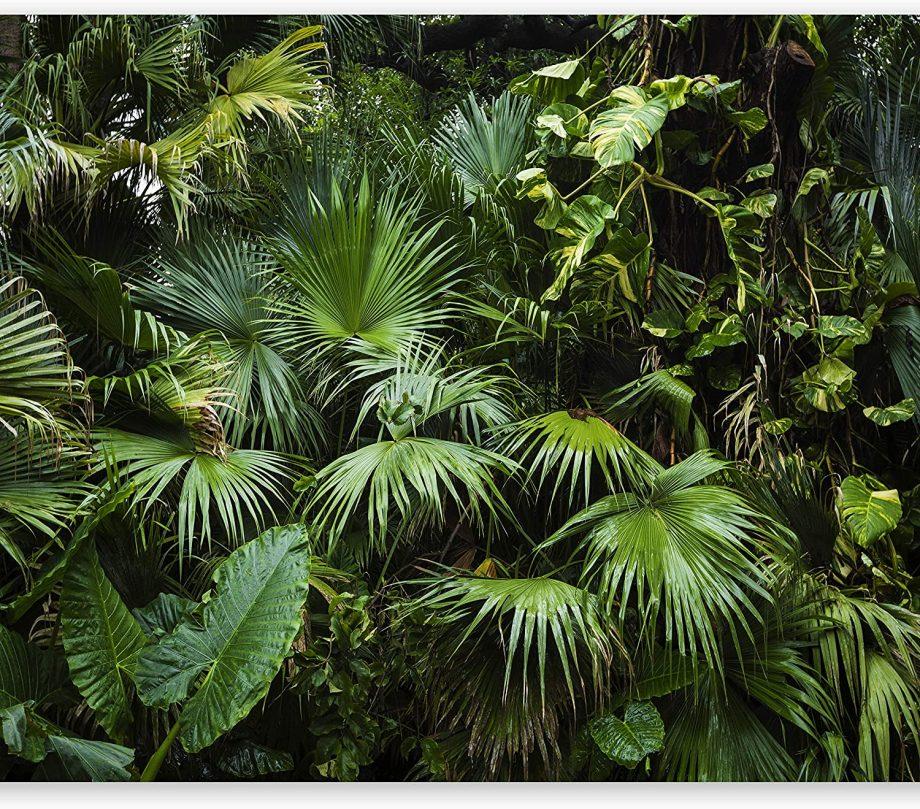 Papier-peint photo jungle