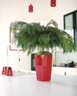 bonsai préservé sans entretien - ElementVegetal