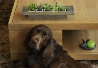 boutique-nox-deco-table-basse-chien